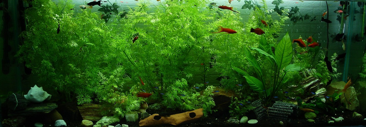 Benefits of Keeping an Aquarium